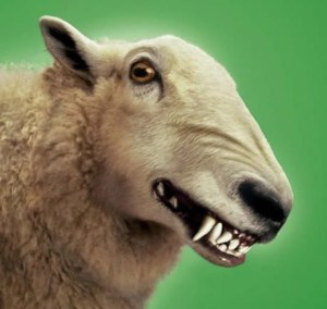 loup en mouton5
